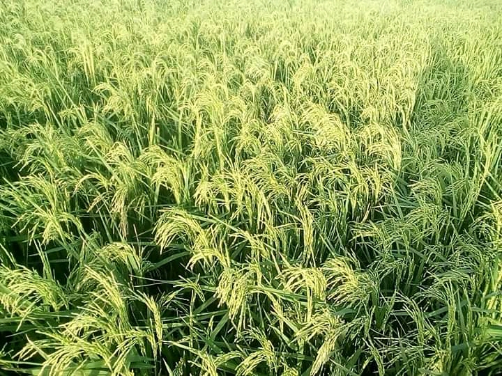 agriculture tchad covid 19